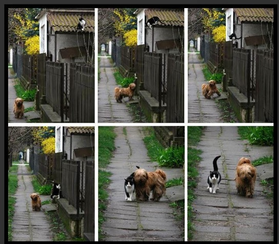 So love and enjoy the people who treat you right.. seek them out, regular-like! Life is not the way it's supposed to be. It's the way it is. Look carefully in each picture for the cat as it makes its way down from the roof to the dog.
